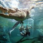 Cage of death: Crocosaurus Cove