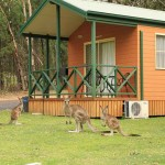 Comfortable Copeton Cabins and friendly neighbours