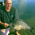 Many NSW lakes are stocked with silver perch
