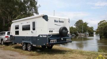 Sunland Blue Heeler