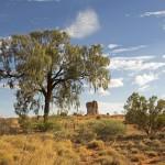 Desert oaks dominate the desert landscape.