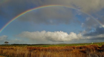 Rainbow Comp – George Morrison 2