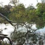 Brooks River Camping Reserve