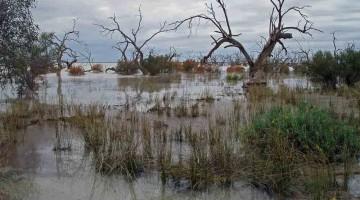 Darling River Run— Part 3: Brewarrina to Wentworth