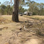 Watch out for falling branches from the river gums here