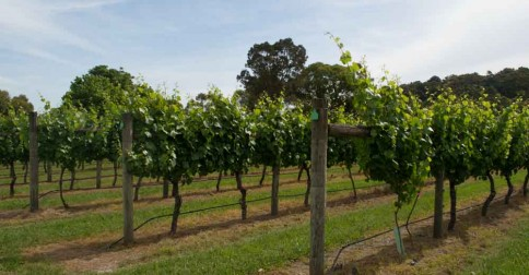 Explore The Beautiful and Bountiful Yarra Valley