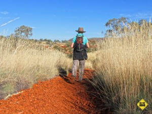 The track to Fortescue Falls cuts through the spinifex