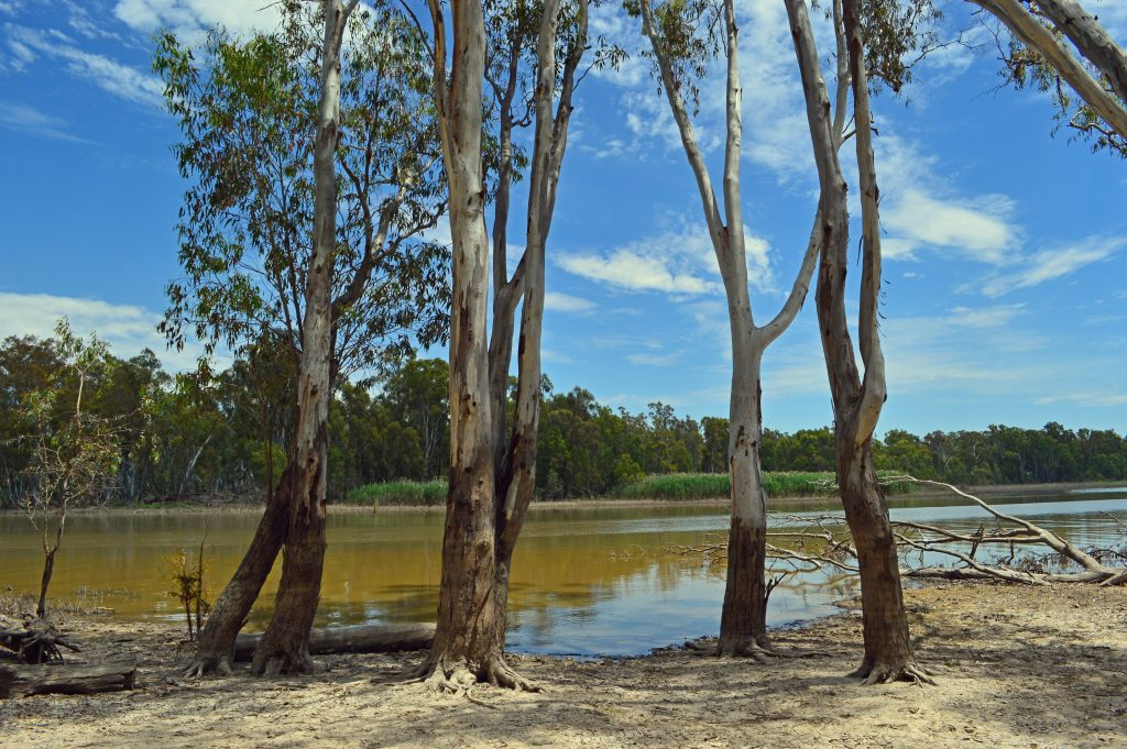 The River Red Gum forests are reliant on periodic flooding