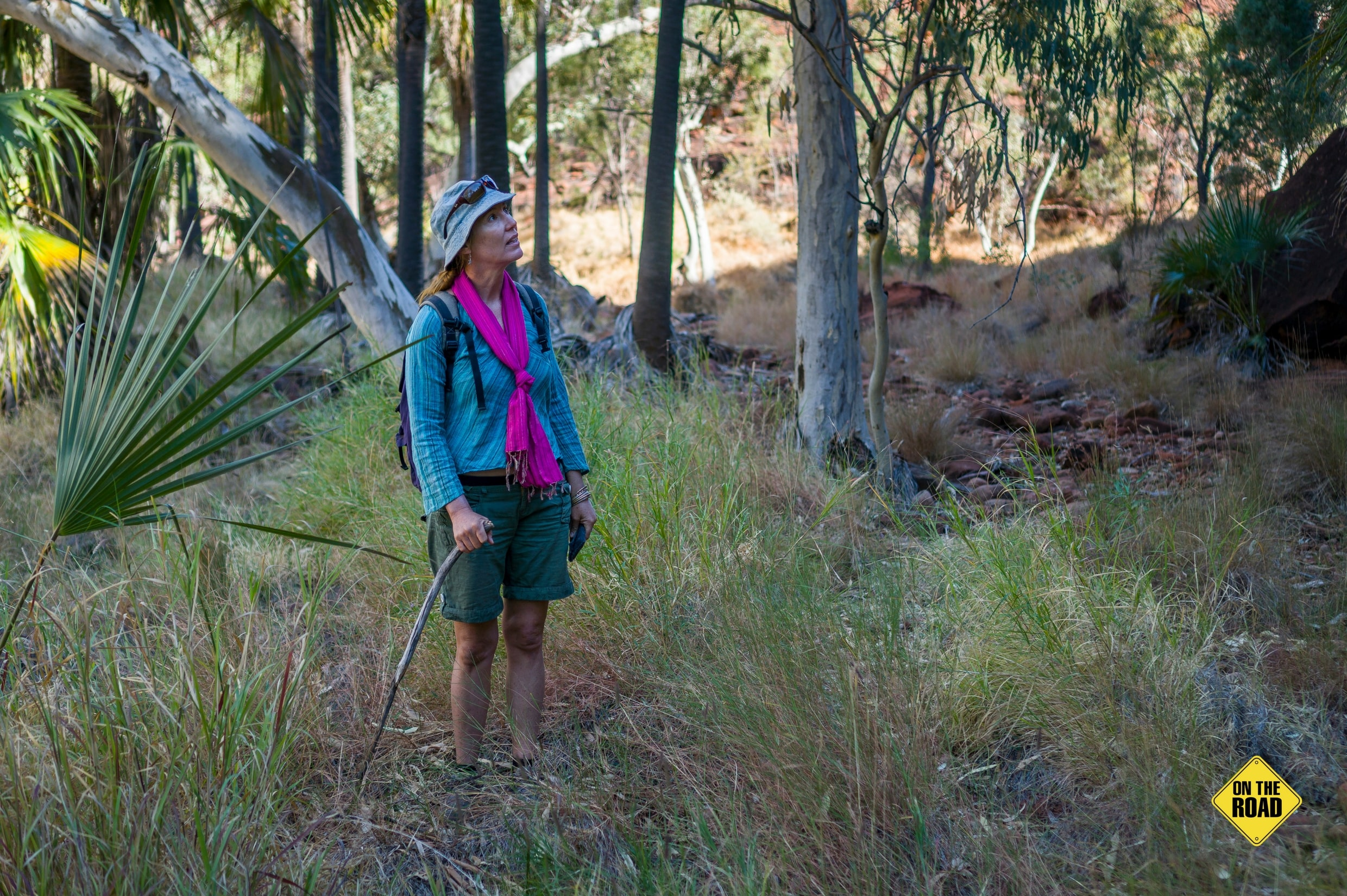 Great walking trails explore scenic pockets of Finke Gorge National Park