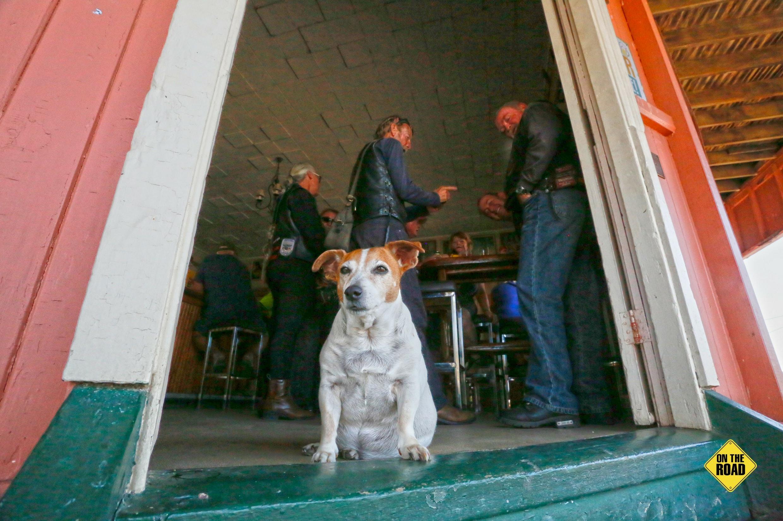 Guard dog at Kilkivan Hotel