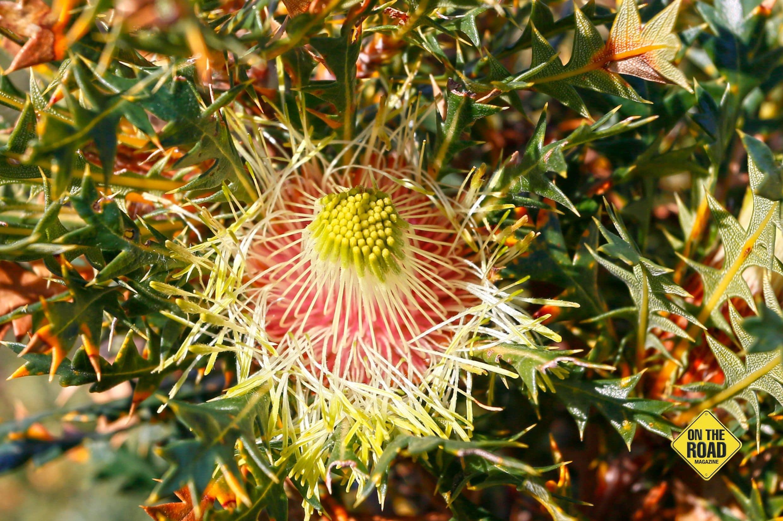 springwildflower 3