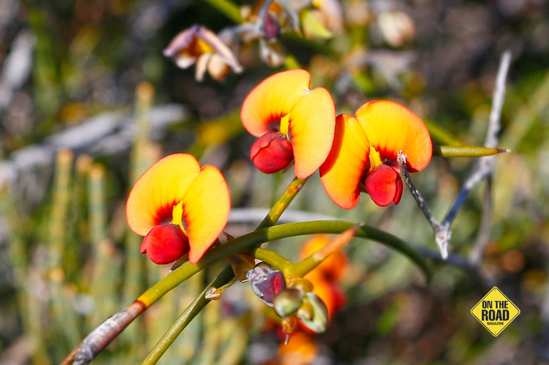 springwild flower 4