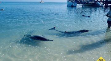 Monkey Mia Dolphin Playground
