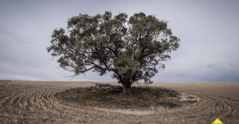 Where is the Mallee?