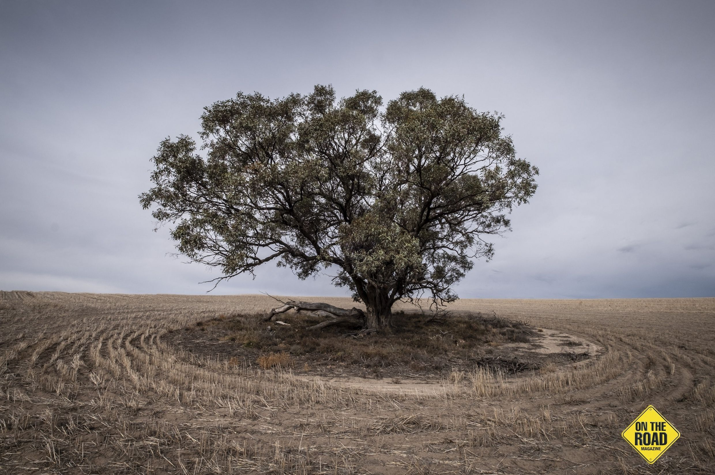 A lonely tree amid cereal stubble near Yapeet JM